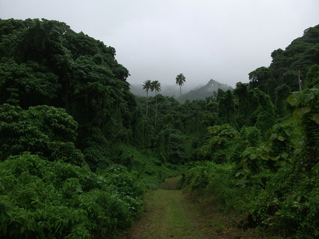 Rainforest in Cook Islands
